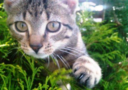 Manifka, mój kot
