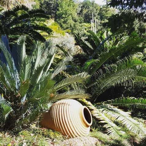 Monte Ogród Tropikalny, a w tle kolory laurissilva