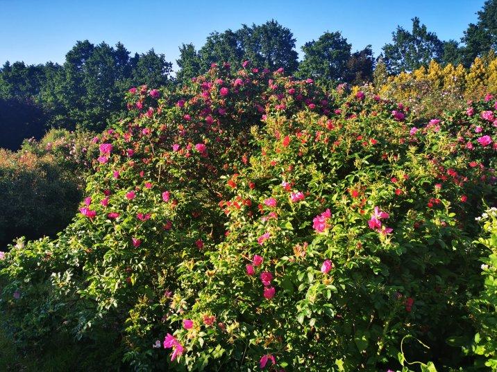 Ogród Botaniczny PAN w Powsinie